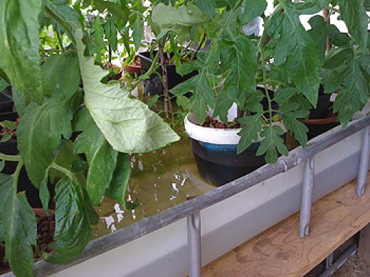 Jord til tomatdyrkning