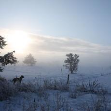 Vinter 2010 var lang og smuk!