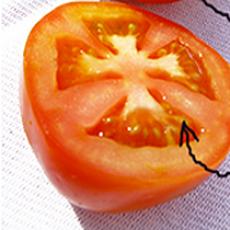 Hvordan laver man tomatfrø